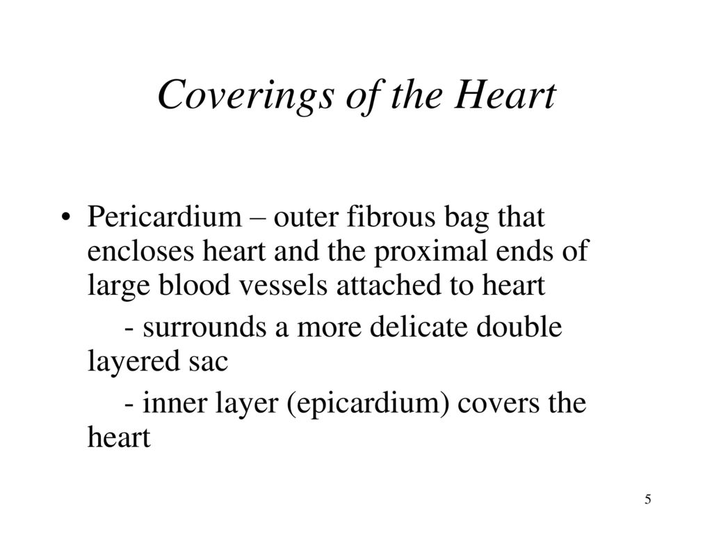 Magnífico Anatomy And Physiology Chapter 15 Cardiovascular System ...