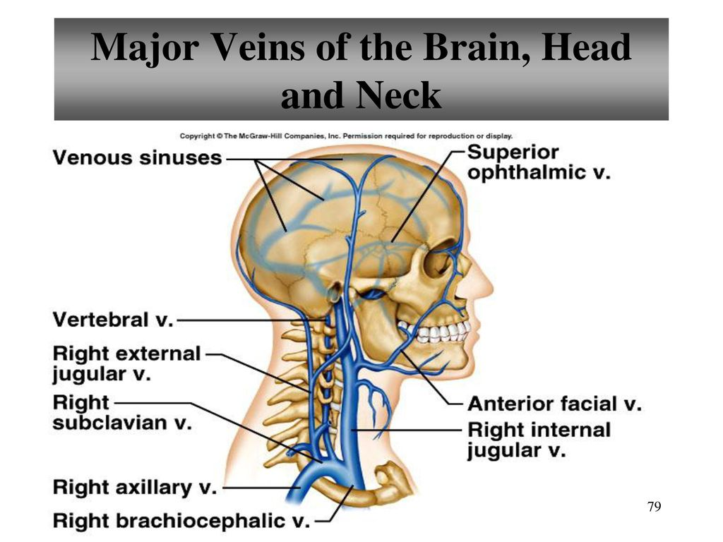 major vein in neck
