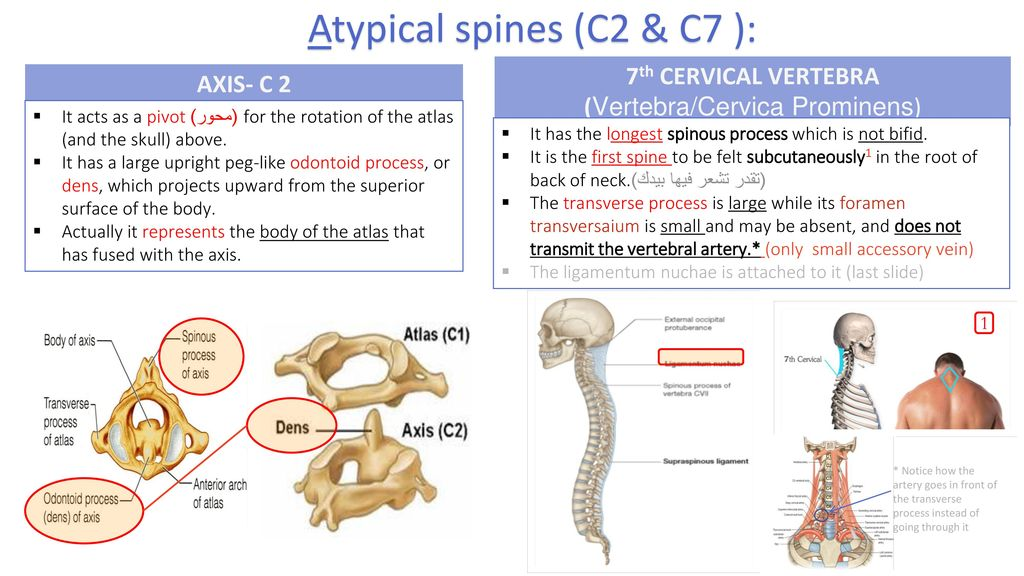 Cervical Spine Editing File Color Code Important Doctors Notes Ppt