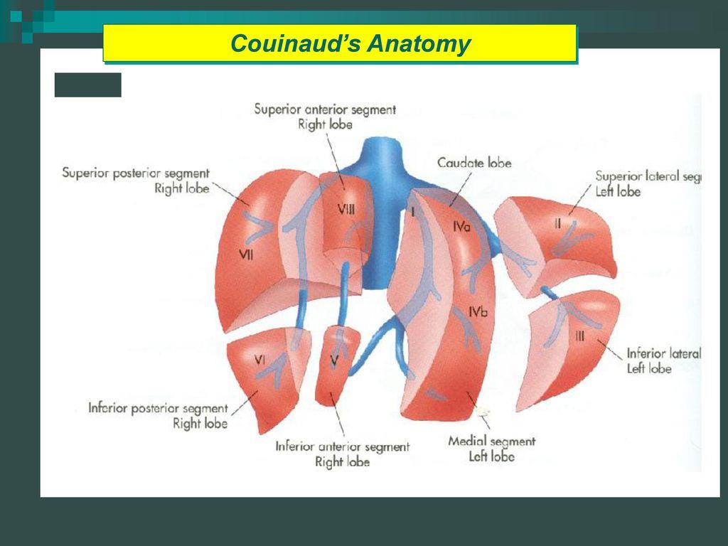 Lackawanna College Diagnostic Medical Sonography Program Ppt Download