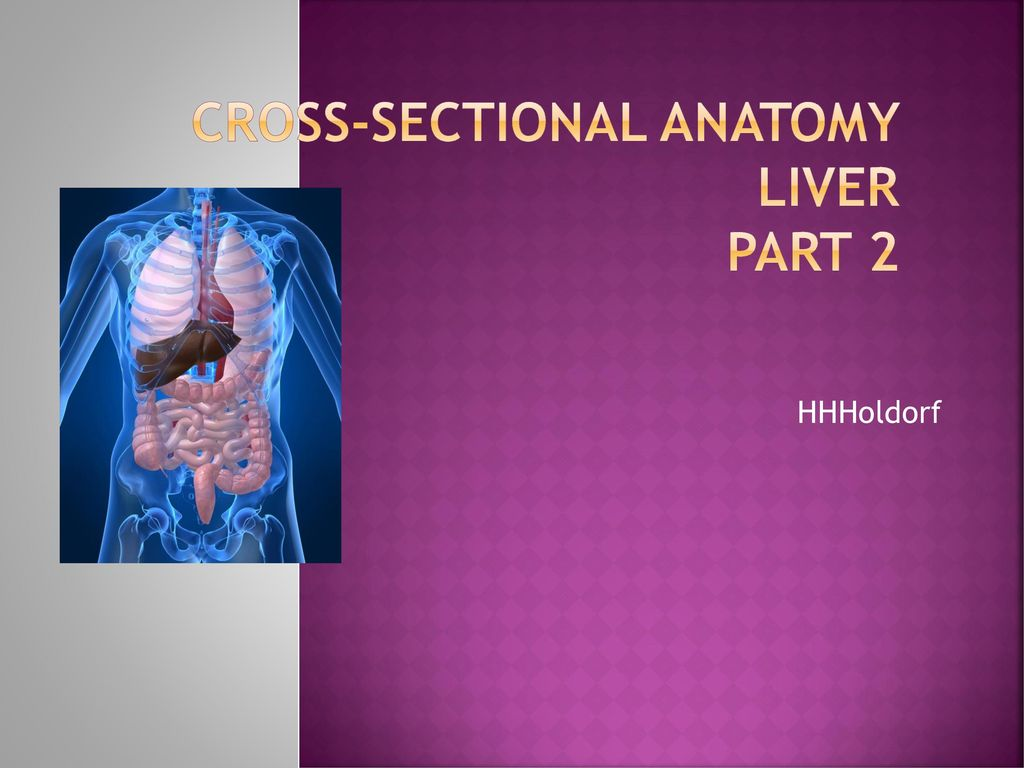 Cross-Sectional Anatomy LIVER Part 2 - ppt download
