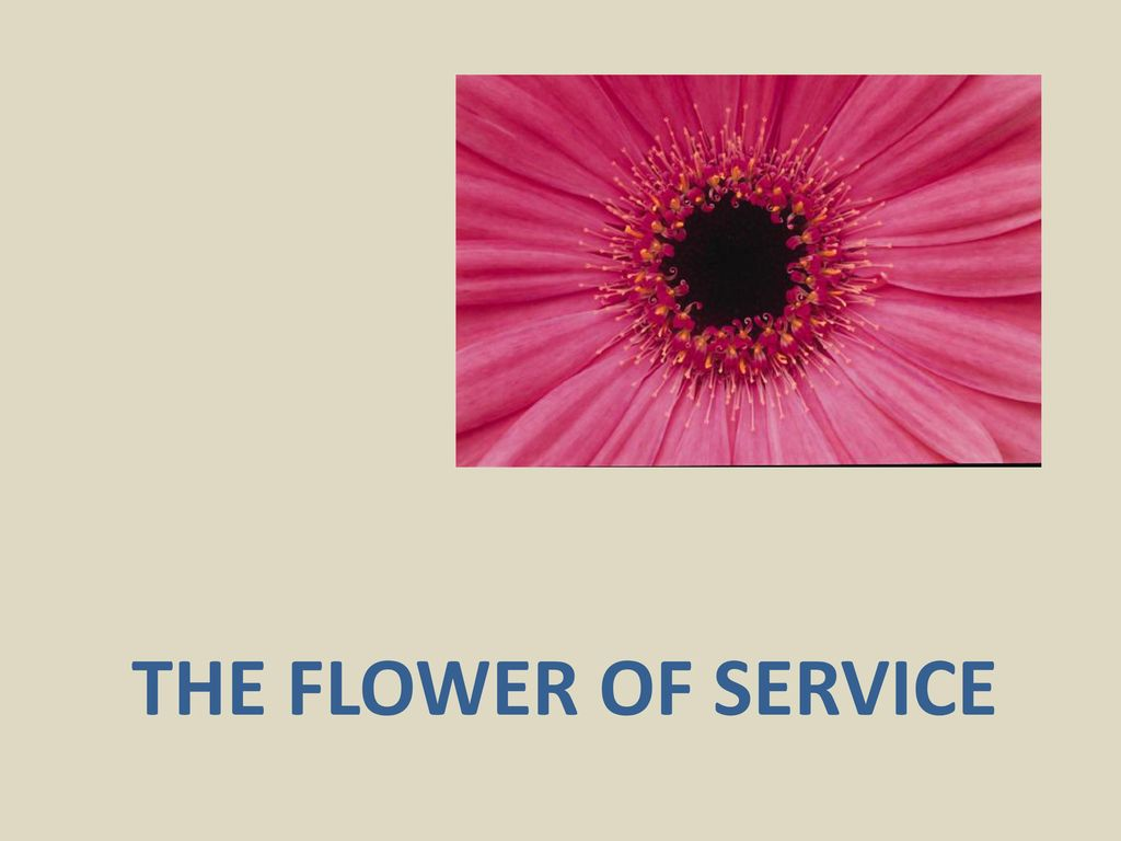 1 THE FLOWER OF SERVICE