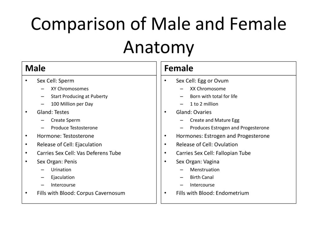 Female Reproductive System - ppt download