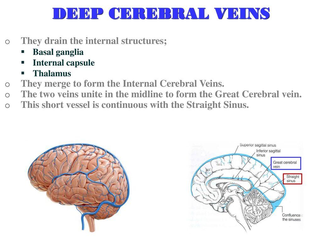 Cerebral Blood Circulation - ppt download