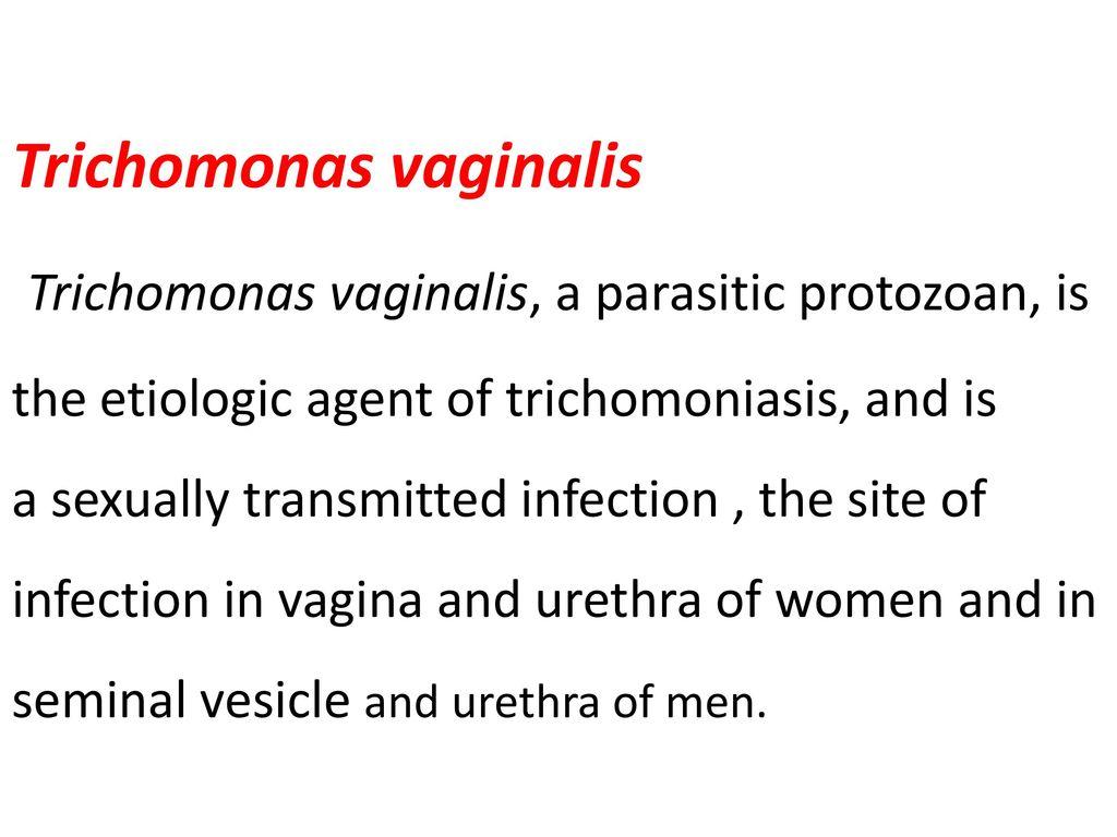 Trichomonas és Toxoplasma veszélyes tandem
