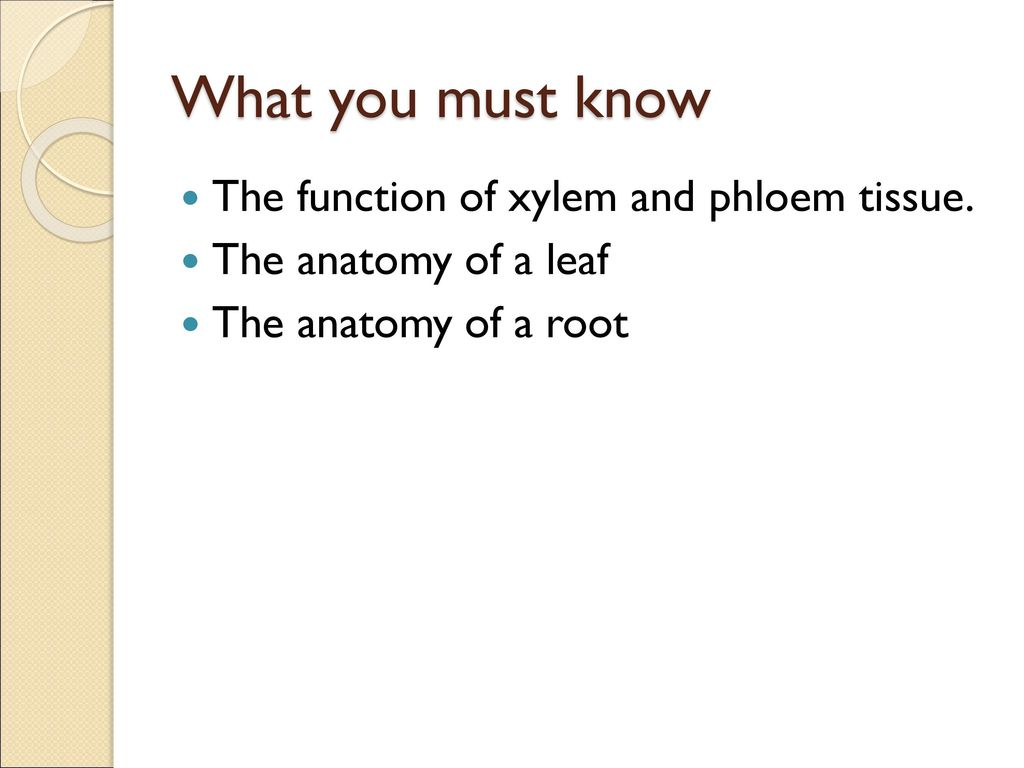 Plant Structure Growth And Development Ppt Download