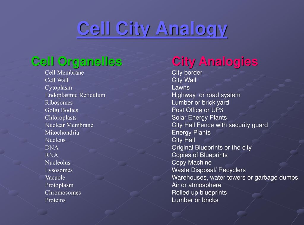 Cell city analogy worksheet gallery worksheet for kids in english cell organelles unit 2 cells ppt download malvernweather Gallery
