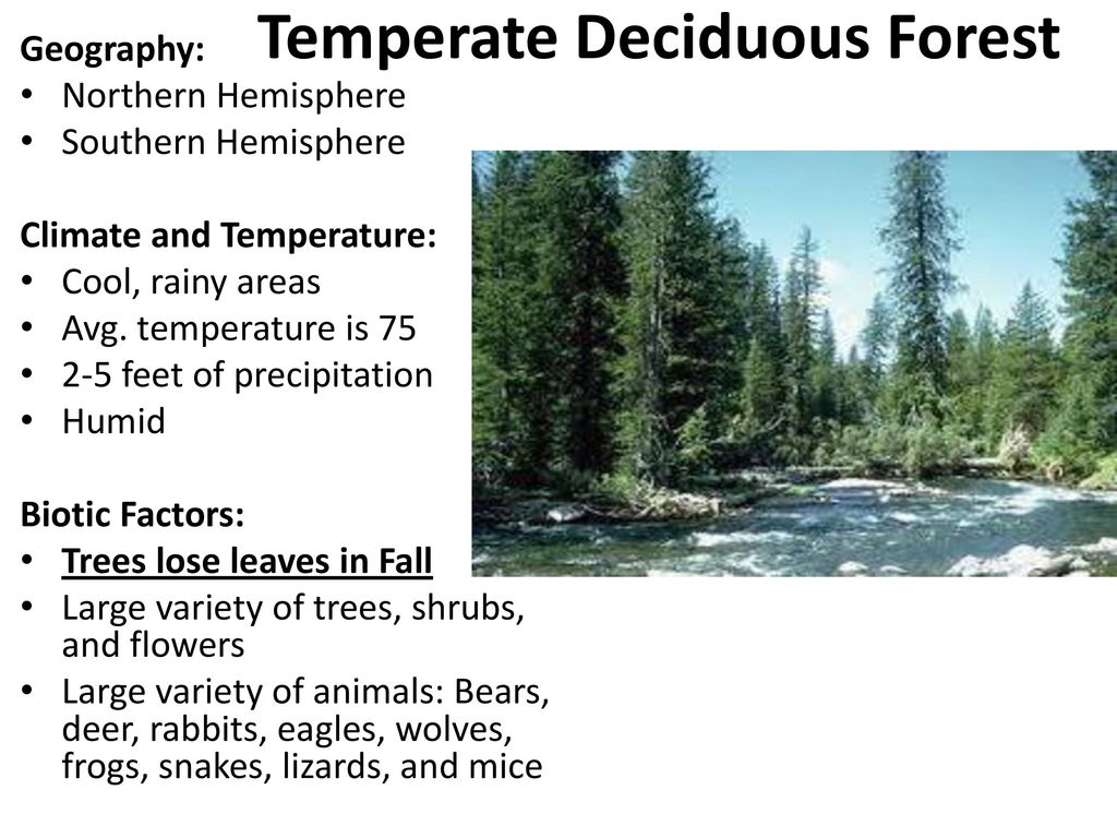 geographical location of deciduous forest