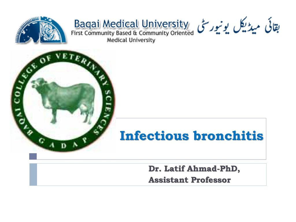 Infectious bronchitis - ppt download