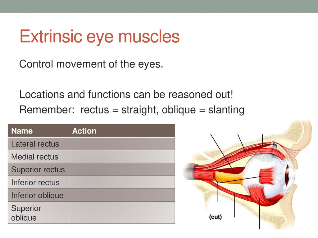 Eye Structure Function Ppt Download