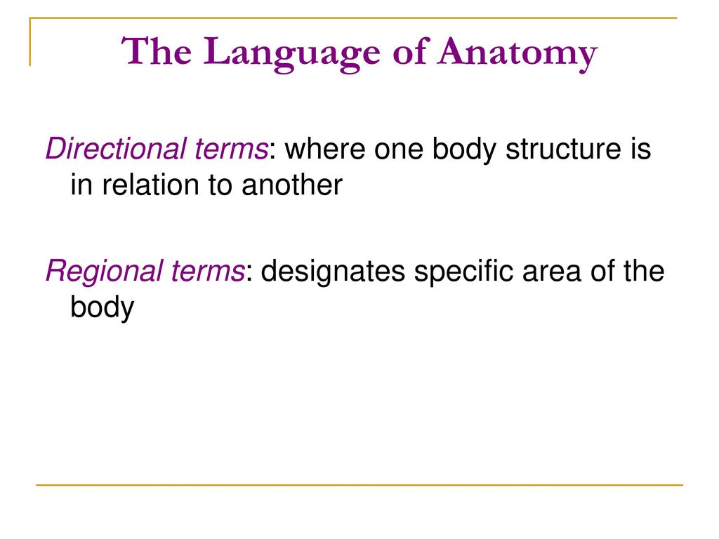 Modern Anatomy Regional Terms Component - Physiology Of Human Body ...