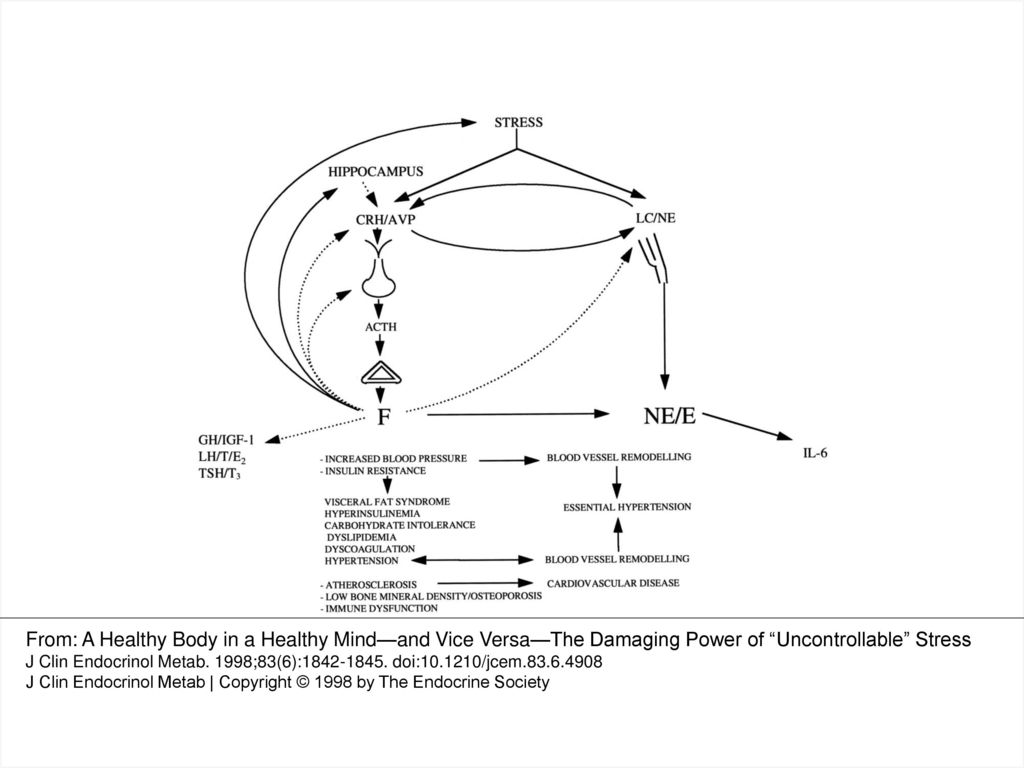 Figure 1 A Schematic Representation Of The Stress System Ppt Download Negative Feedback
