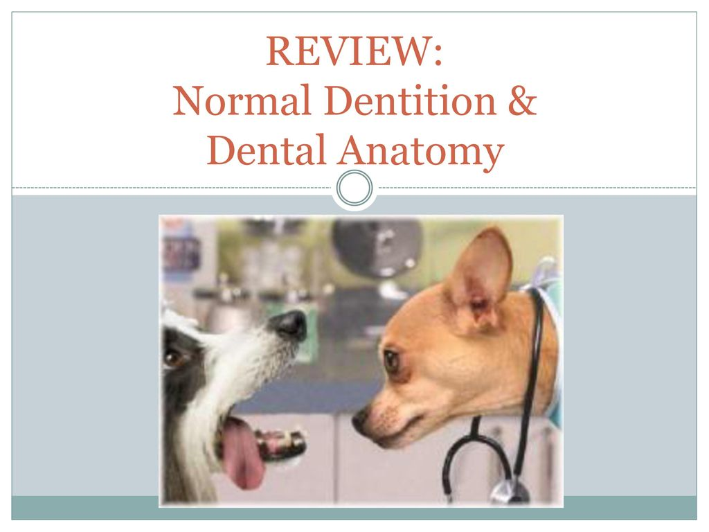 REVIEW: Normal Dentition & Dental Anatomy - ppt download