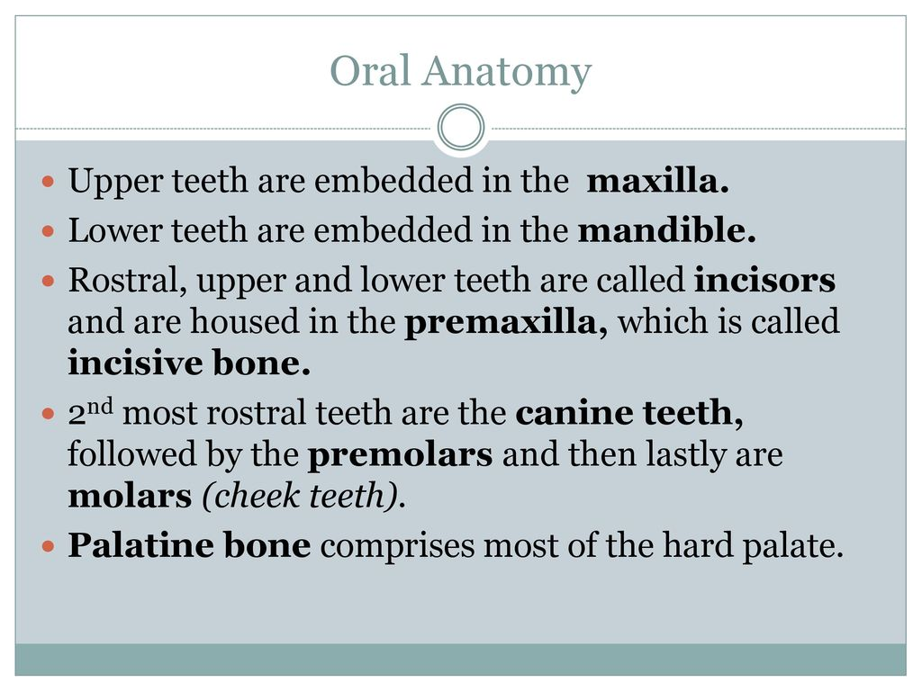 Review Normal Dentition Dental Anatomy Ppt Download