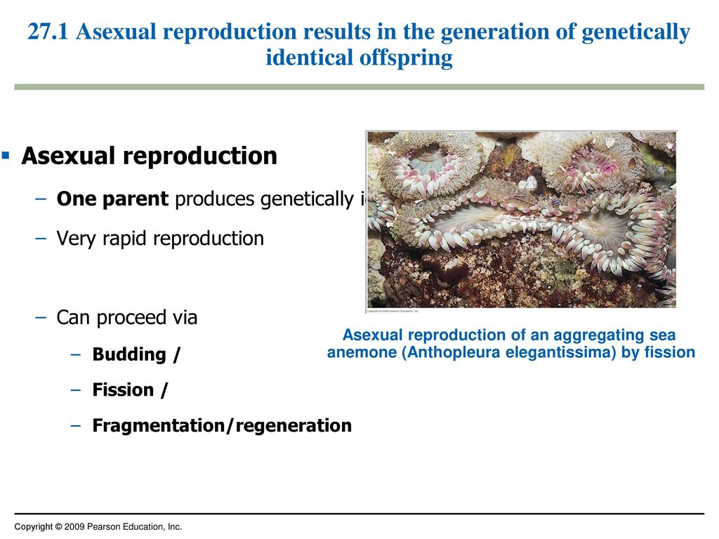 Which species accommodates asexual reproduction in humans