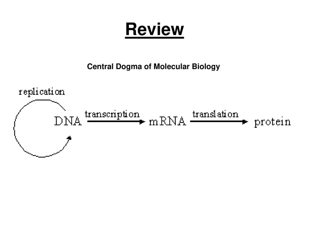 Protein Synthesis: Transcription and Translation - ppt download
