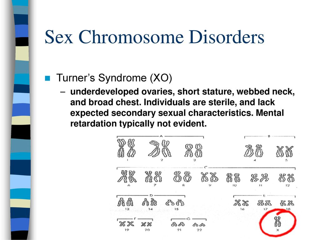 Tracing The Inheritance Of The Human Y Chromosome Ppt Download