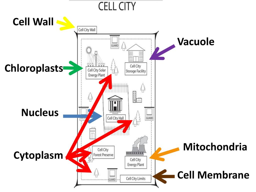 Simple Diagram Of A Plant Cell