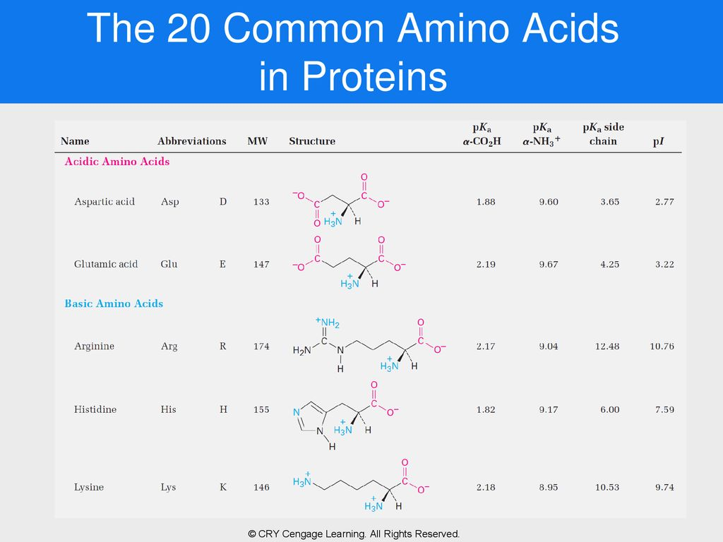 Chapter 15 biomolecules amino acids peptides and proteins ppt the 20 common amino acids in proteins thecheapjerseys Gallery
