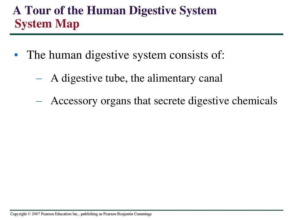 A Tour of the Human Digestive System System Map