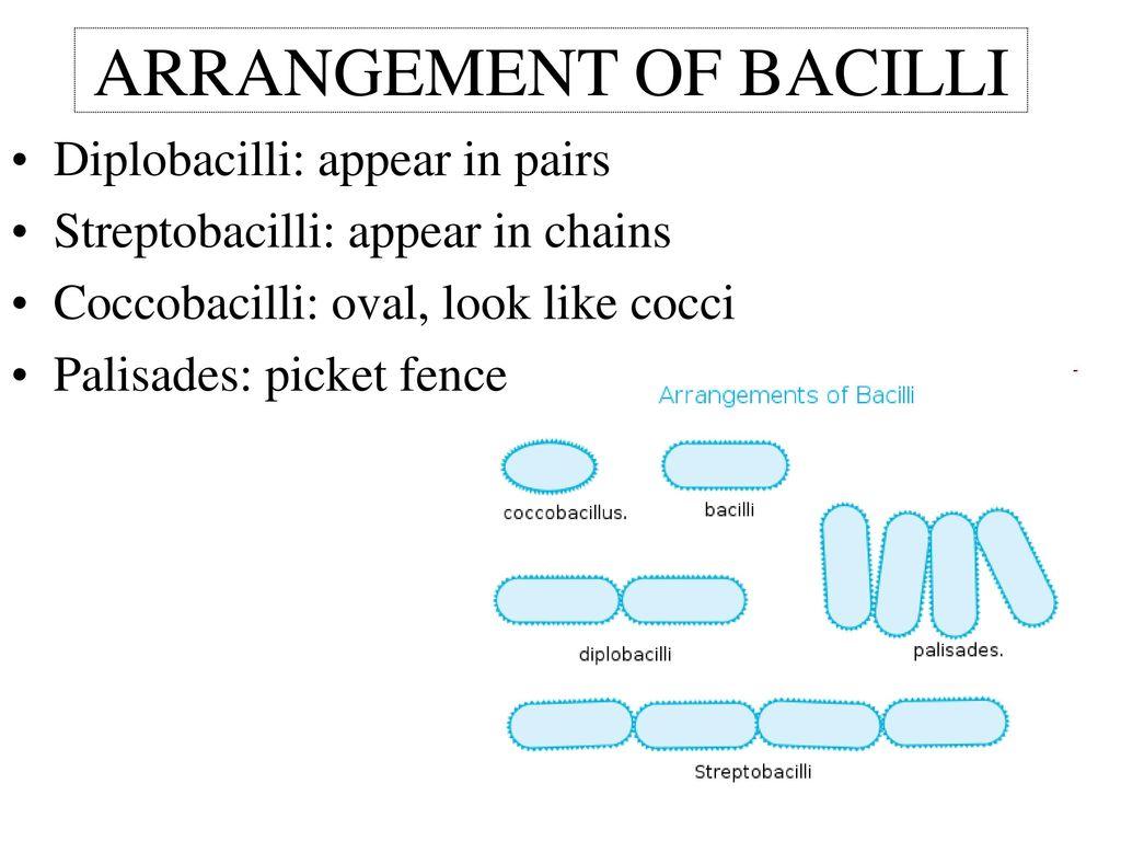 CHAPTER 4 Functional Anatomy of Prokaryotic and Eukaryotic Cells ...