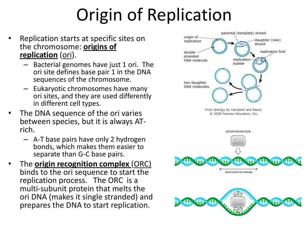 Replication  - ppt download