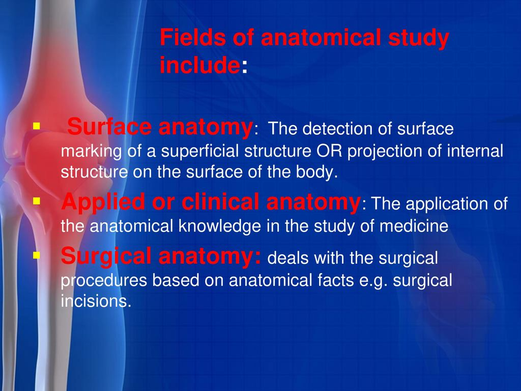 Anatomy introduction Dr Ayman Alserr Dr Naser Radwan. - ppt download