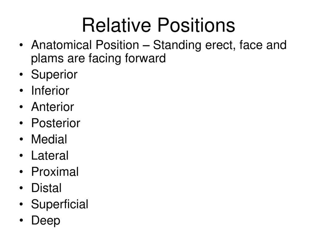 Excepcional Relative Positions Anatomy Ilustración - Anatomía de Las ...