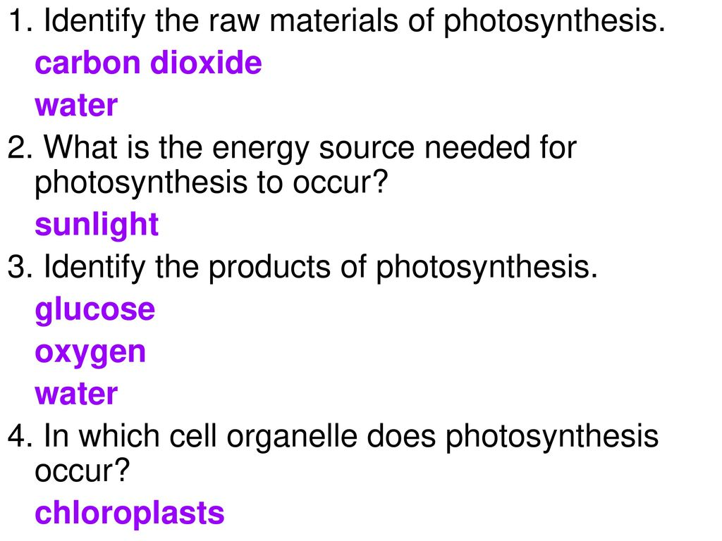 Exploring photosynthesis in a leaf - Chloroplasts