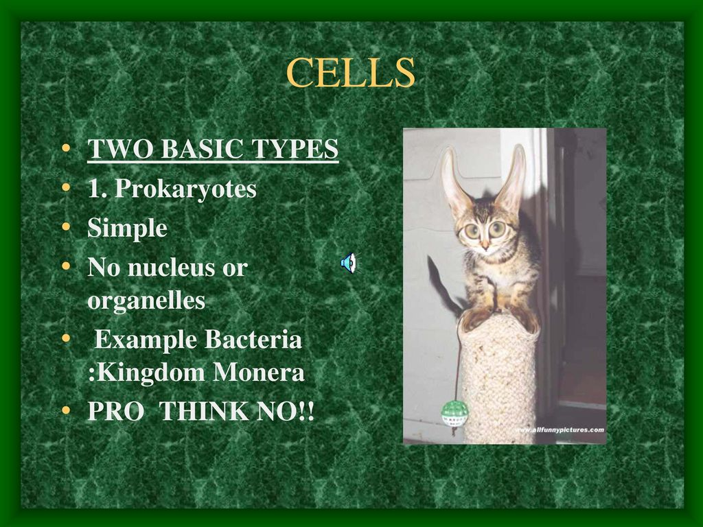 Everything You Wanted To Know And Then Some Ppt Download Cells In The Monera Kingdom Example Bacteria Are Prokaryotes Did 27 Two Basic Types 1 Simple No Nucleus Or Organelles