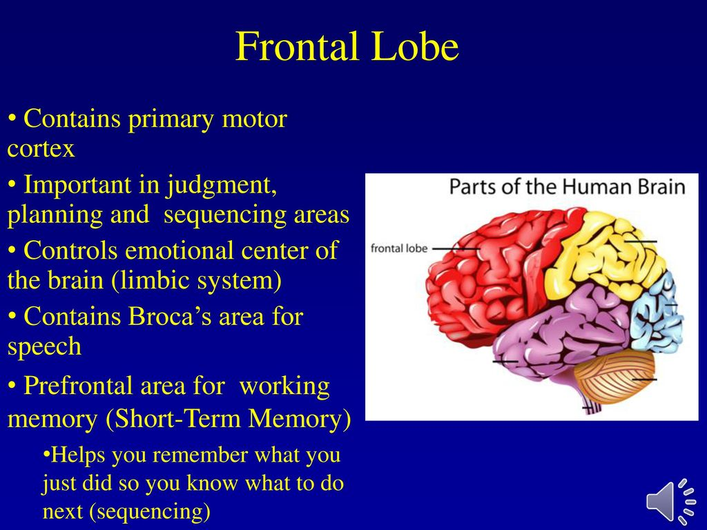 The cerebral cortex ppt download 7 frontal ccuart Choice Image