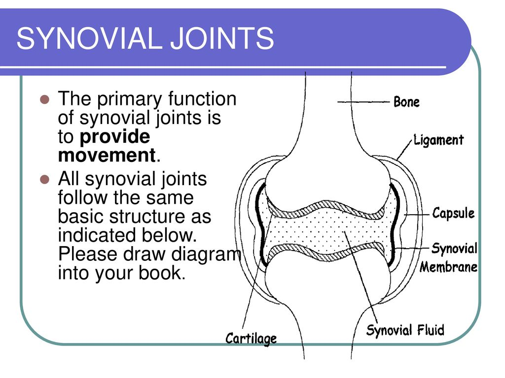 Welcome To Anatomy Achievement Standard Ppt Download Synovial Joint Diagram 28