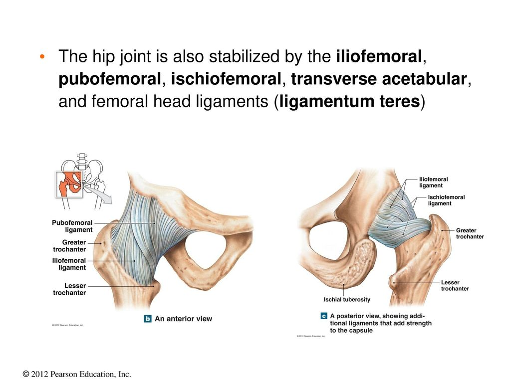 Articulations – Joint Anatomy and Function Flash Cards - ppt