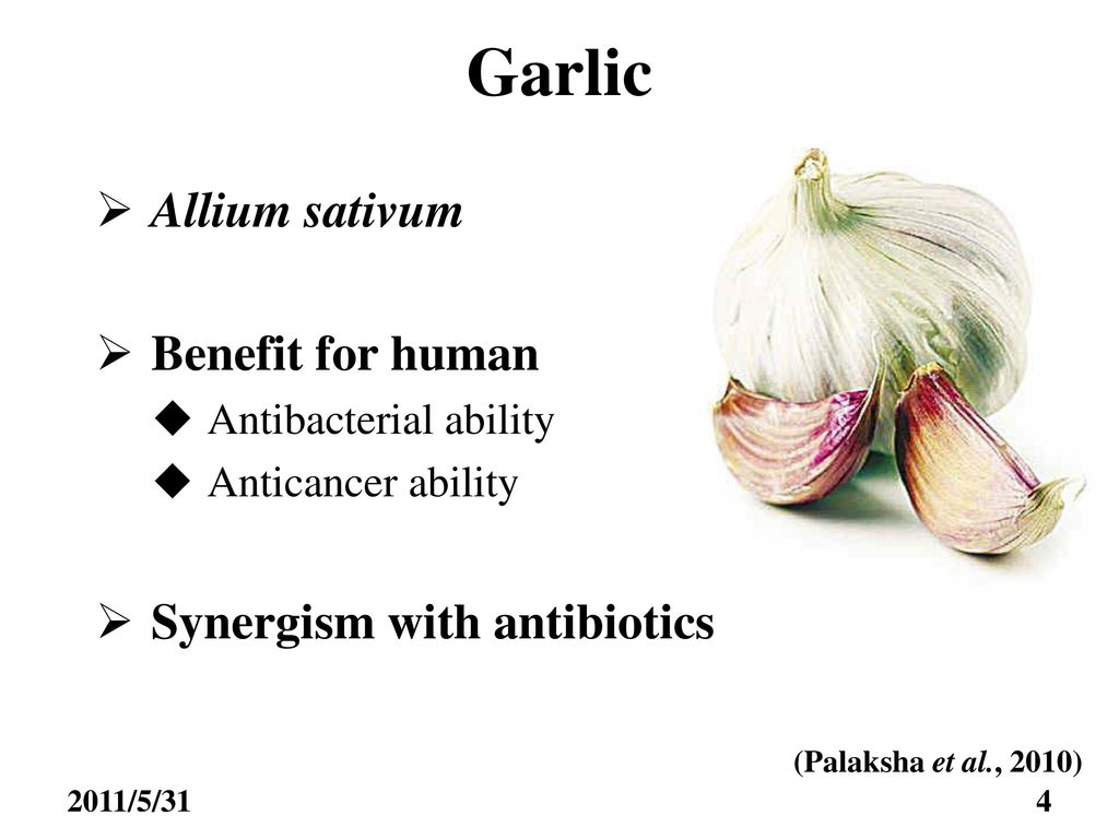Study on the antibacterial activity of garlic extracts 大蒜
