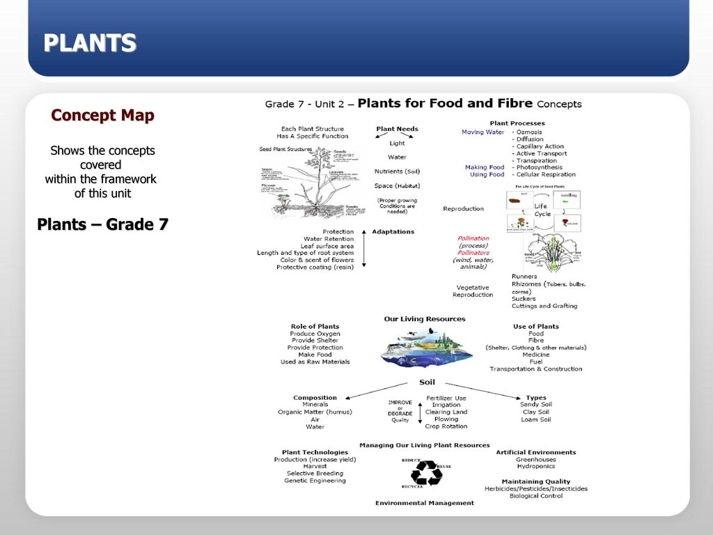 for food fiber plants powerpoint slideshow grade 7 science ppt