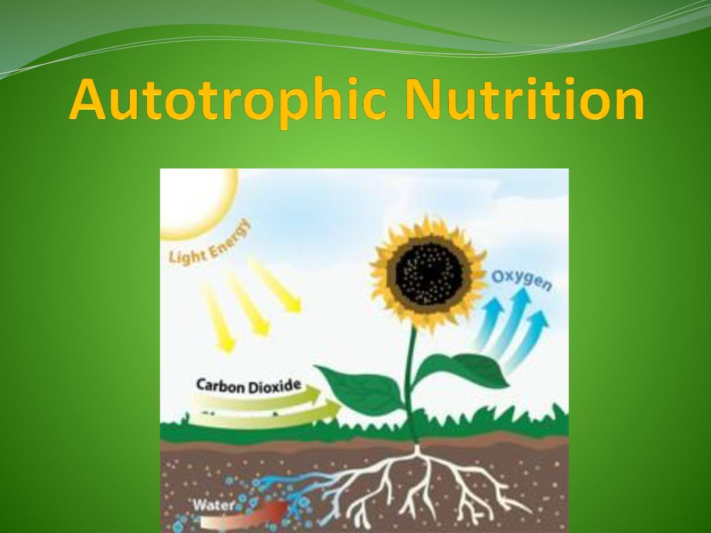 essay on autotrophic nutrition The bell jar essay belinda october 02, 2016 autotrophic nutrition 2 from the bell jar: metaphor analysis scott, and analysis, free summary and a charming seaside.