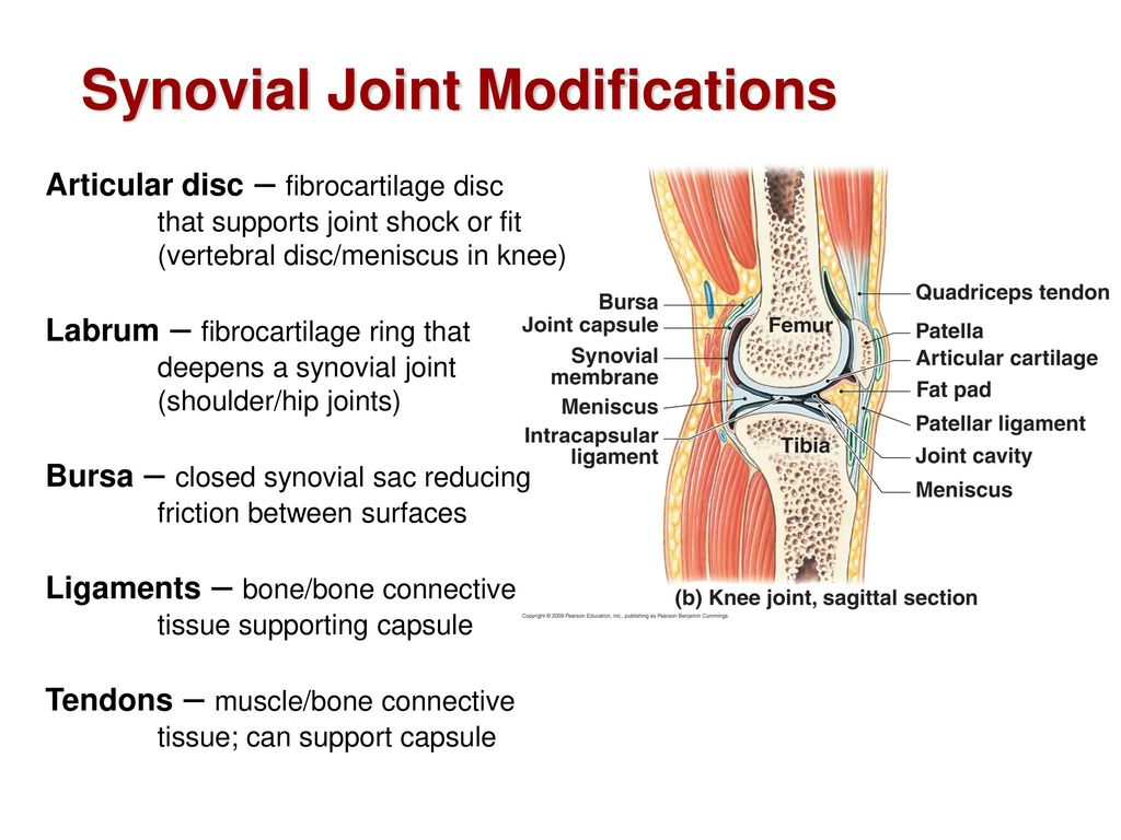 Joints, Muscles and Movement I - ppt download