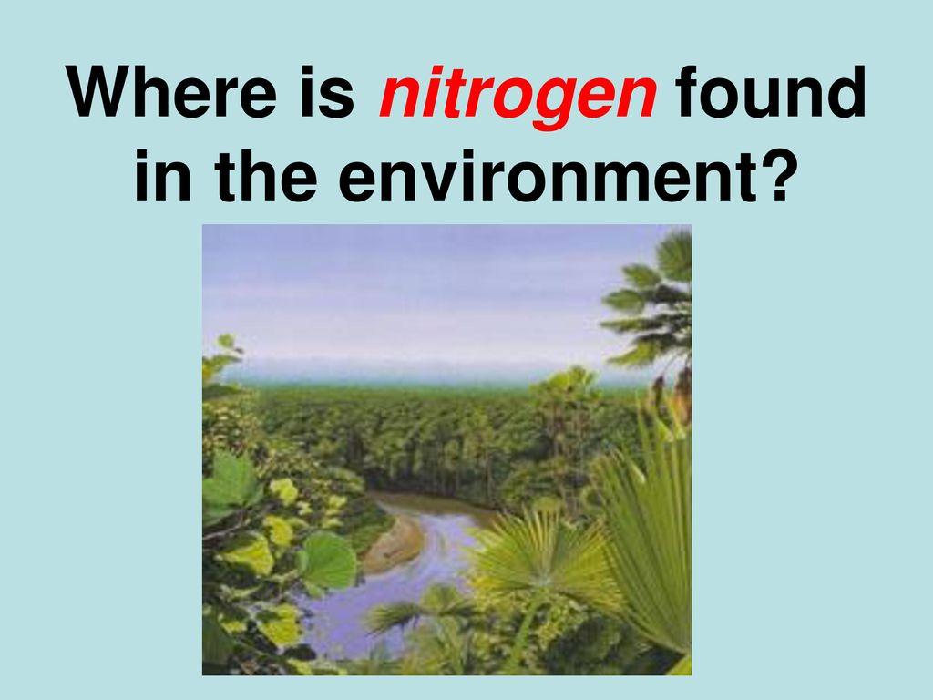 What is nitrogen 13