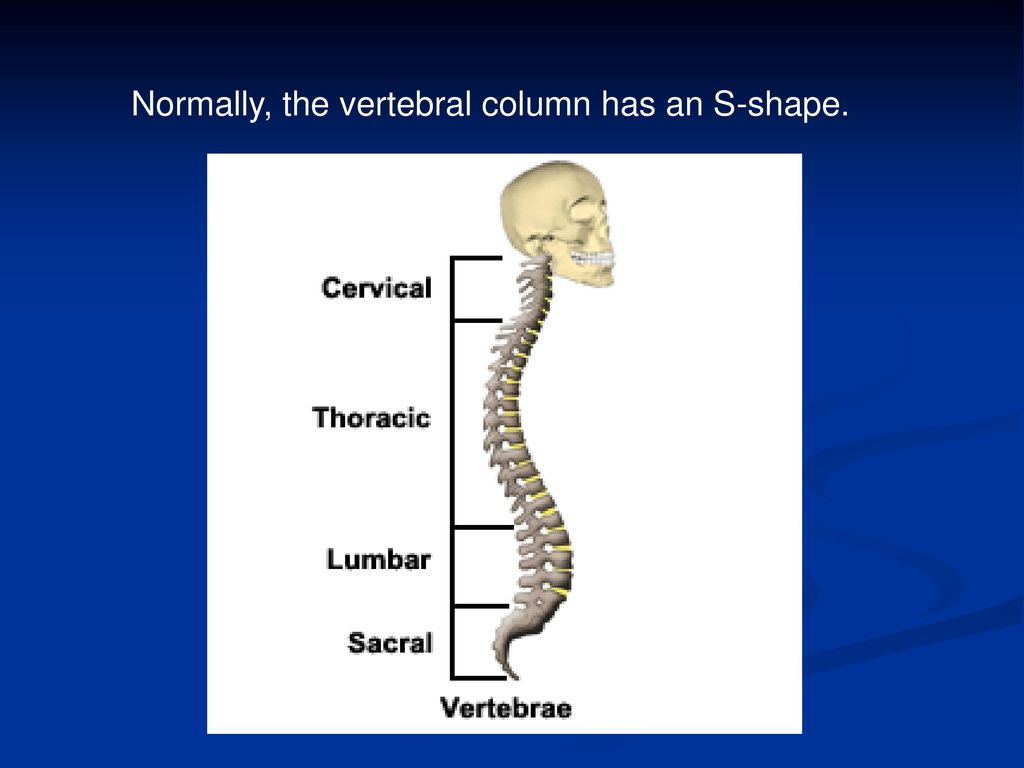 The Vertebral Column The Back Bones Ppt Download