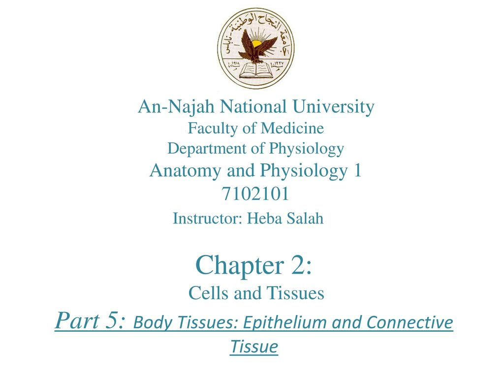 Chapter 2: Part 5: Body Tissues: Epithelium and Connective Tissue ...