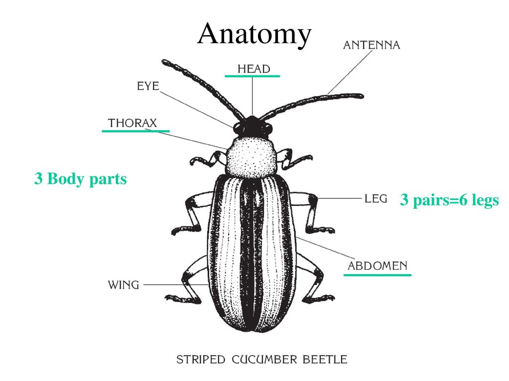 You\'ll never look at a bug the same. - ppt download