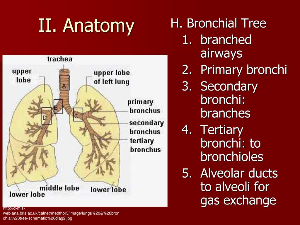 J. Hinson Human Anatomy and Physiology January ppt download