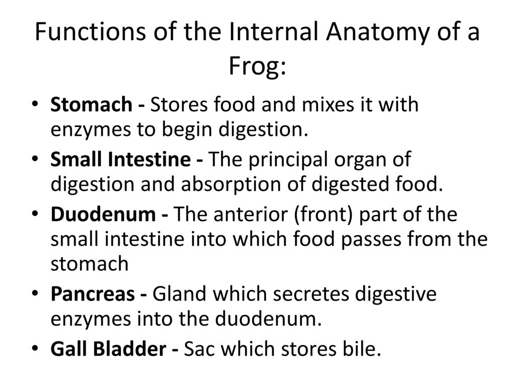 Frog body parts and functions ppt download functions of the internal anatomy of a frog ccuart Gallery