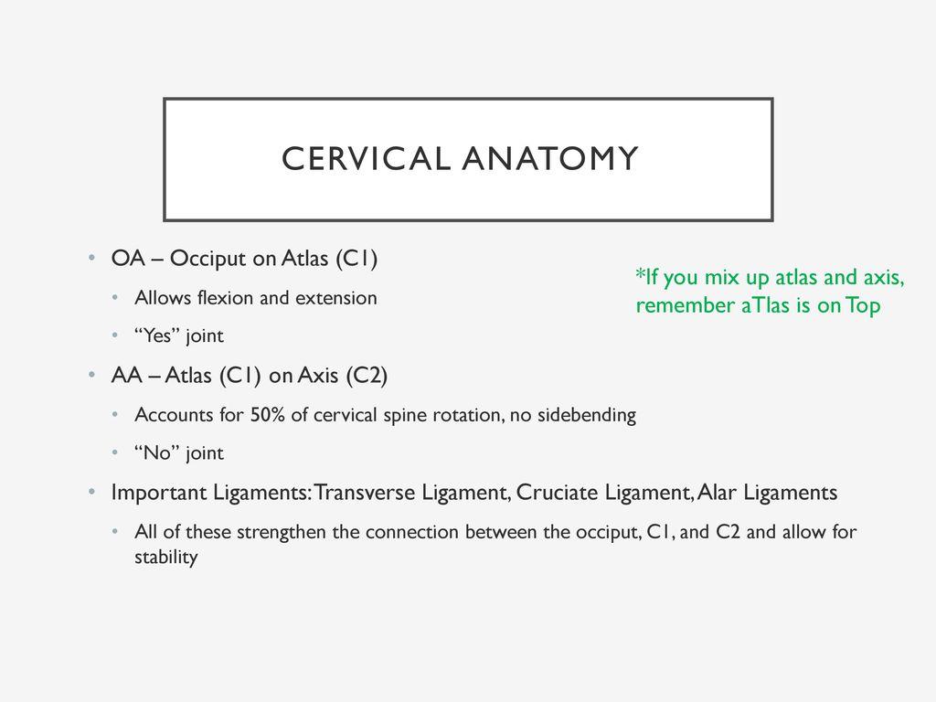Atlas C1 Anatomy Choice Image - human body anatomy