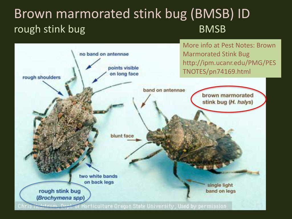 Mary Louise Flint, Ph.D. Extension Entomologist Emerita UC Davis ...