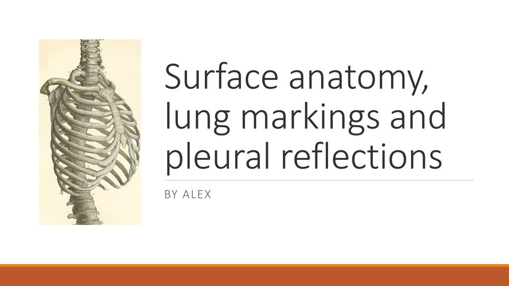 Surface Anatomy Lung Markings And Pleural Reflections Ppt Download