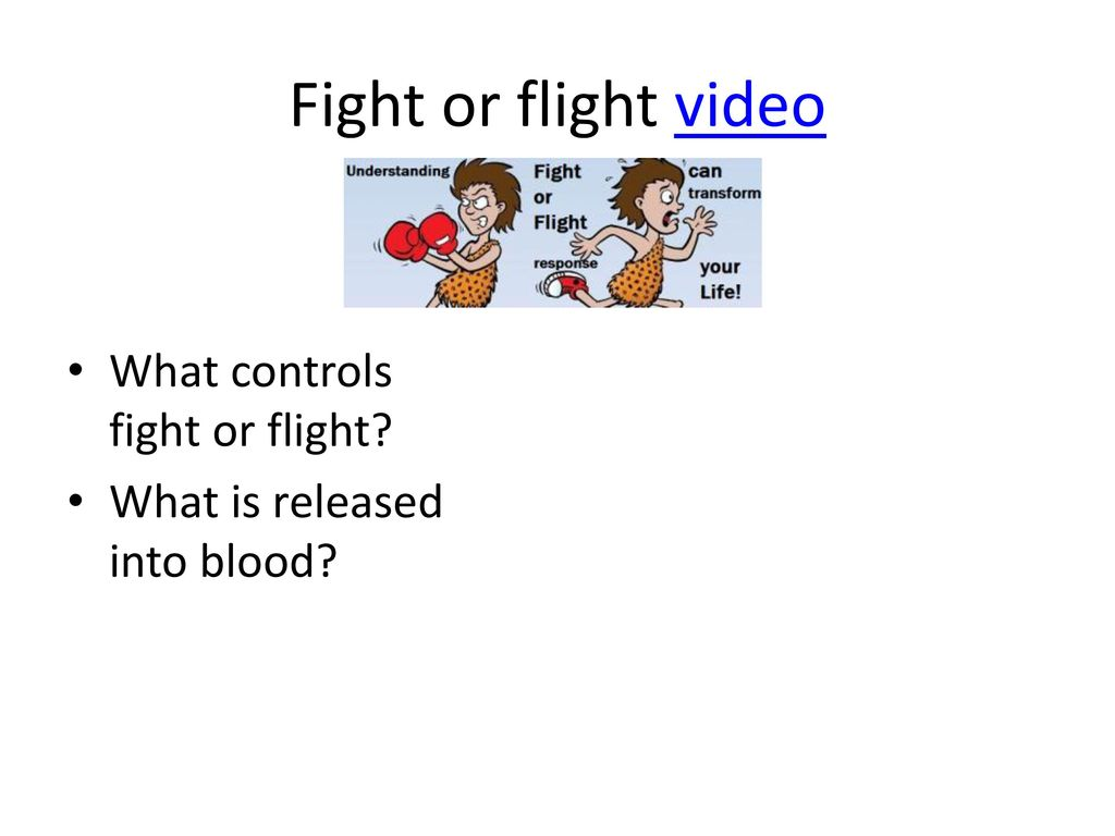Fight Or Flight Ppt Download