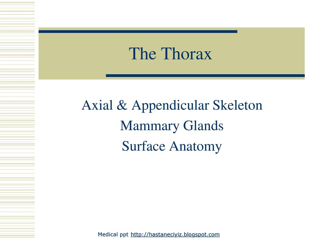 Axial & Appendicular Skeleton Mammary Glands Surface Anatomy - ppt ...