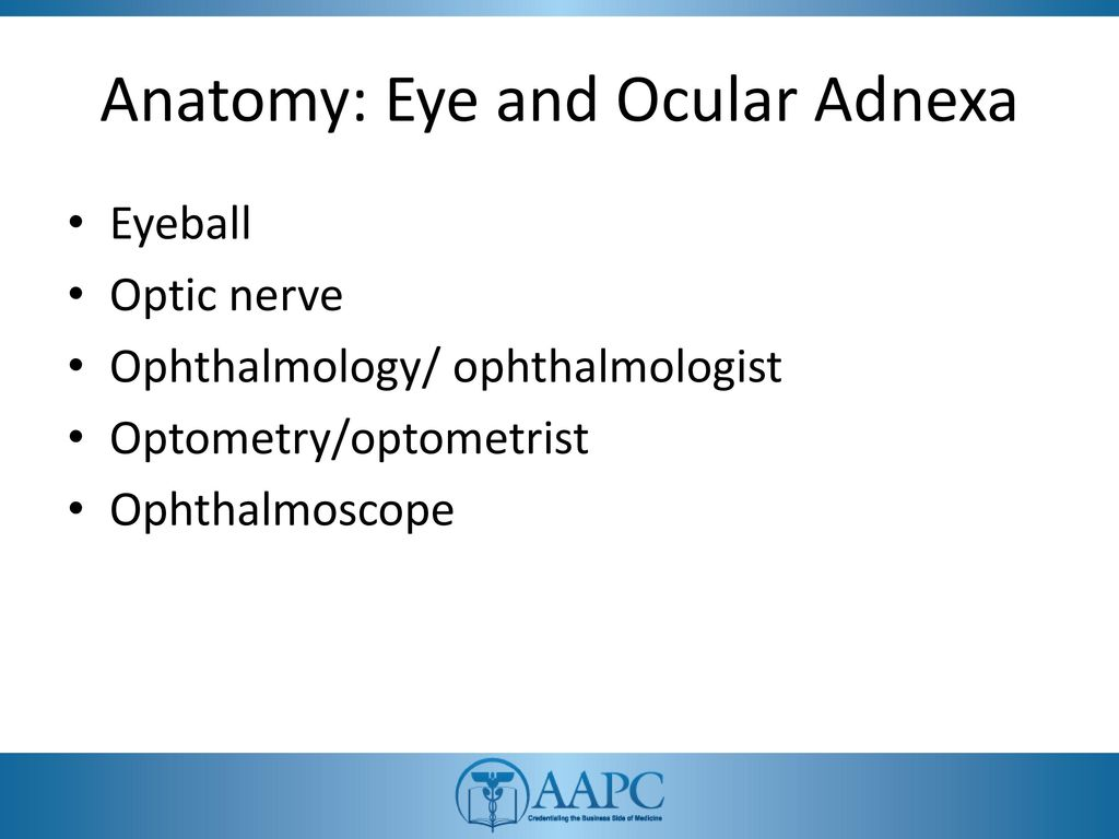 Eye and Ocular Adnexa, Auditory Systems - ppt download