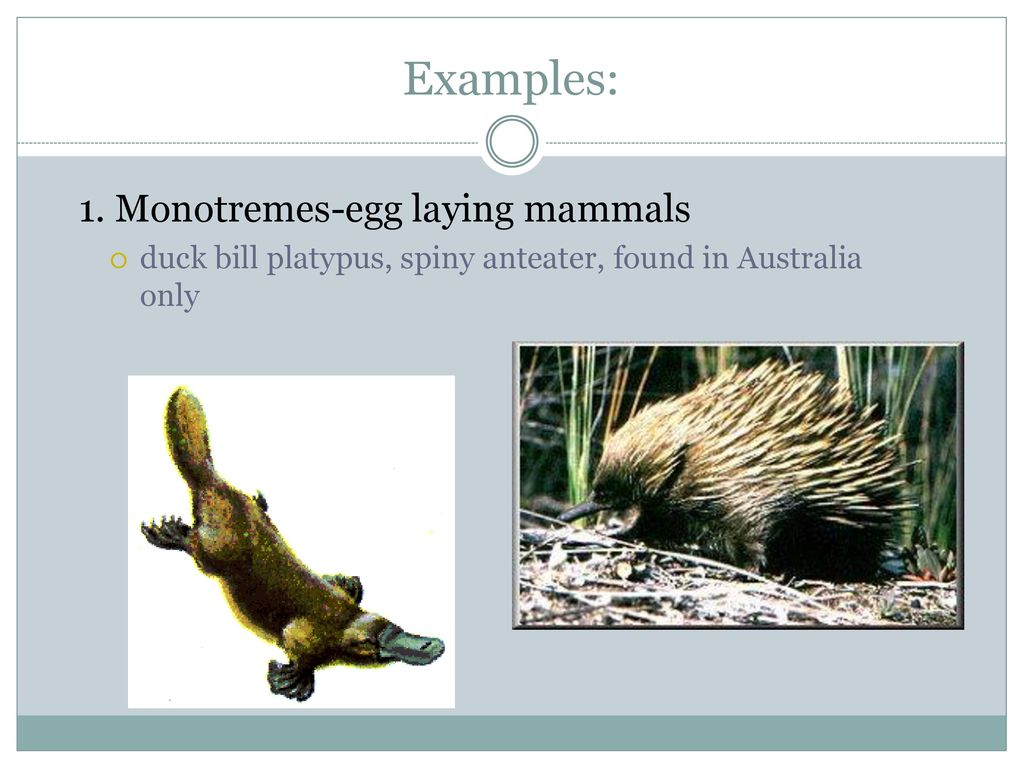 Animals With Backbones Ppt Download